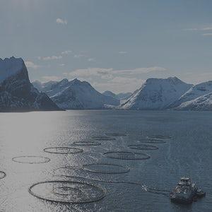 Imenco havbruk aquaculture blur